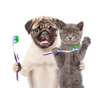 Puppy And Kitten With Toothbru...