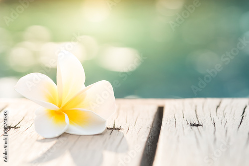 Photo Stands Plumeria Frangipani plumeria Spa Flower on wooden floor near the pool
