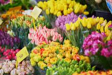 Variety Of Tulips On Flower Market