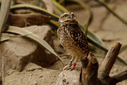 Photo Stands Owl uil