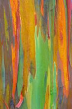Vertical Rainbow Eucalyptus Tree Bark