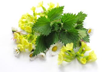 Fototapeta Przyprawy Spring herbs