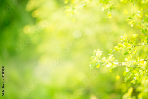 Poster Printemps Abstract nature green background of spring