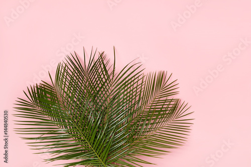 Top view of a bouquet of palm leaves on a pastel pink background. Minimal concept.