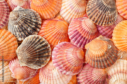 Bright summer background texture of scallop seashells
