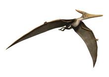 3D Rendering Pteranodon On White