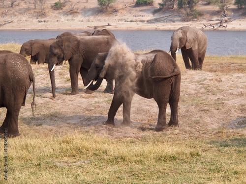 Staande foto Afrika Botswana