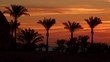 Palm trees against the sky at dawn. Egypt Sinai