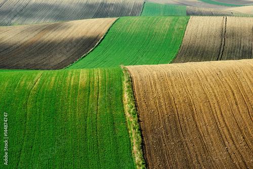 Foto op Plexiglas Groene Fields and agriculture, spring countryside, Ponidzie, Poland
