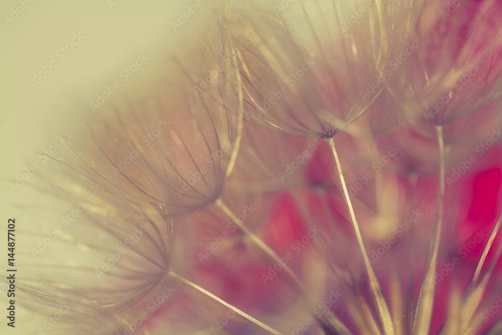 Fototapety, obrazy: wiosenne tło z dmuchawcami.