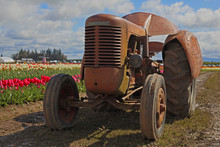 Old Rusted Tractor Rows Of Vib...
