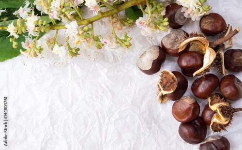 Chestnuts with tree blossom flowers on white