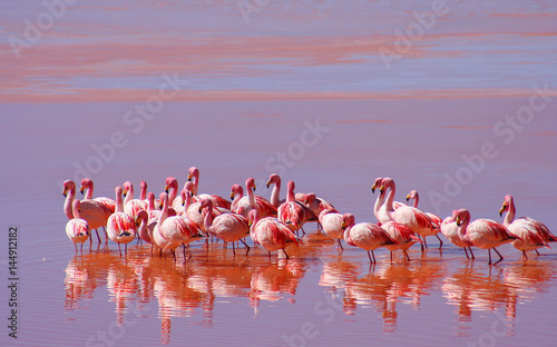 Foto op Aluminium Flamingo Flock of Flamingoes