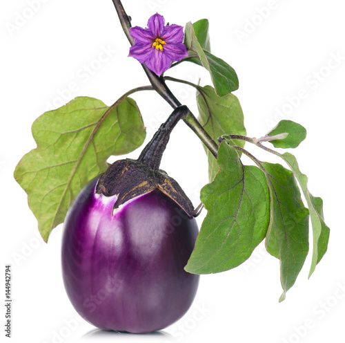 Fresh purple aubergine