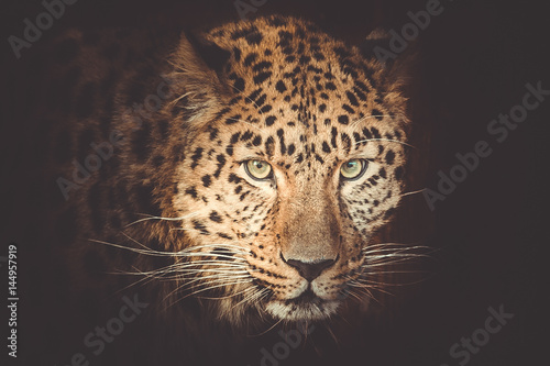 Recess Fitting Leopard leopard