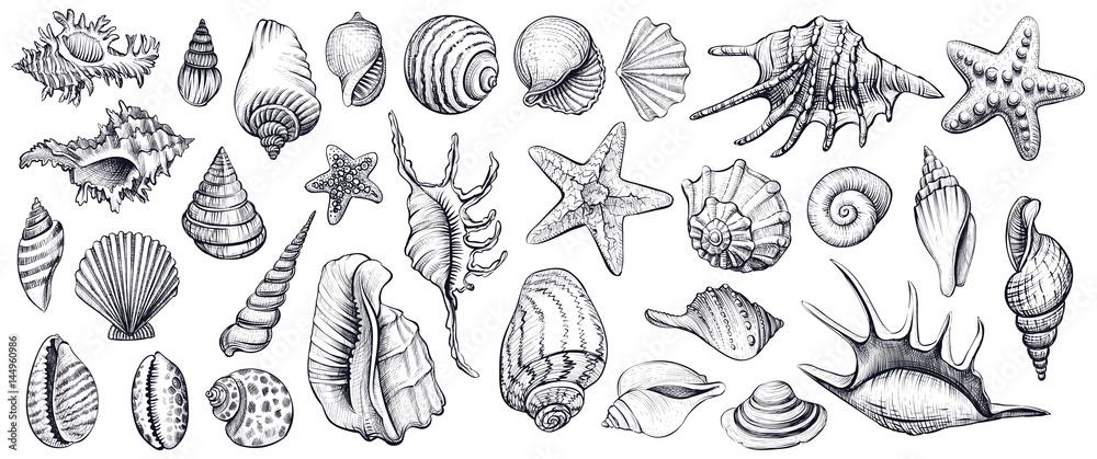 Fototapety, obrazy: Seashells vector set. Hand drawn illustrations.