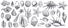 Seashells Vector Set. Hand Dra...