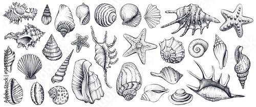 Seashells vector set. Hand drawn illustrations. Fotobehang