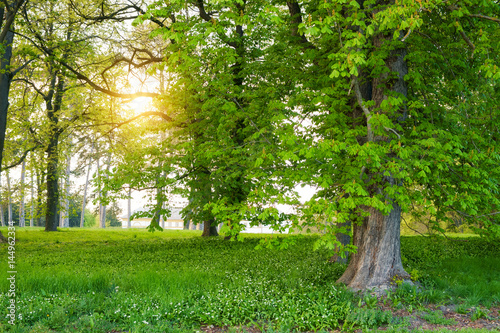 Sunlight in the green forest springtime Canvas