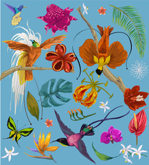 Fototapeta Egzotyczne bright tropican birds and flowers