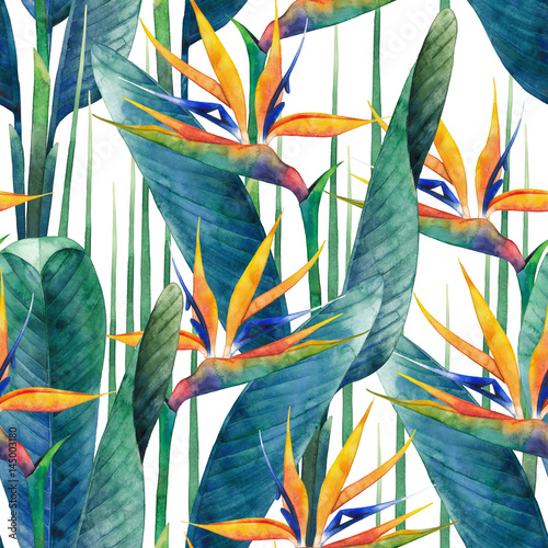 Spoed Foto op Canvas Paradijsvogel Watercolor strelitzia pattern