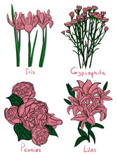 Set. Four Kinds Of Lilac Flowers With Names On A White Background Eps 10 Illustration