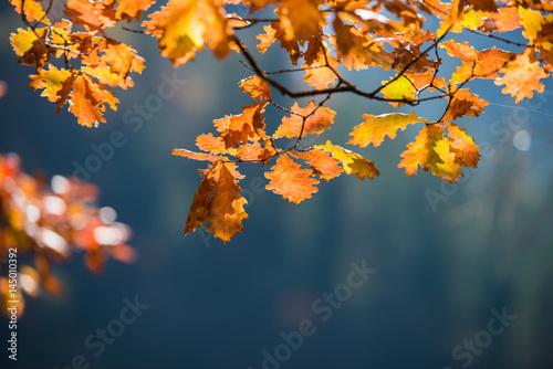 Foto auf Leinwand Baume Autumn leaves, , selective focus
