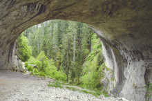 Big Cave Entrance To Green Pine Tree Forest