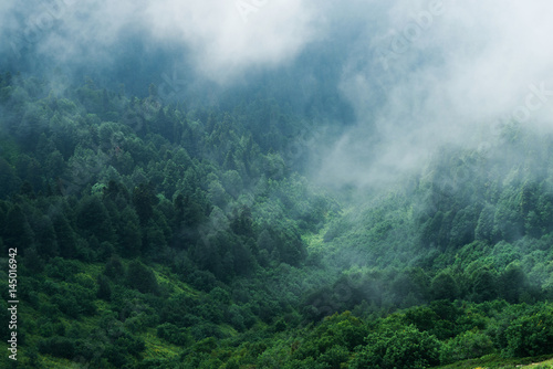Fotomural Туманный лес на склоне горы