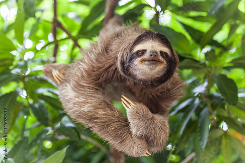 Fotografia  The sloth on the tree