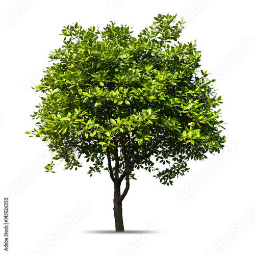 Fényképezés  Tree isolated on a white background, Can be used a tree for part assembly to your designs or images
