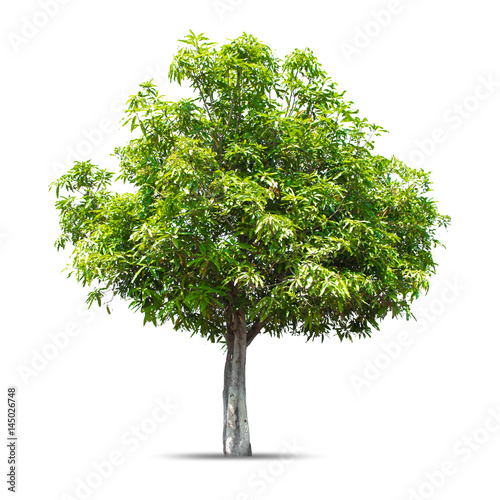 Valokuva  Tree isolated on a white background, Can be used a tree for part assembly to your designs or images