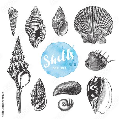 Fotografía  summer, beach and ocean vector design elements: collection of hand drawn sea she
