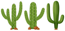 Different Shapes Of Cactus