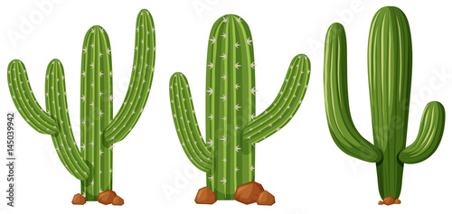 Slika na platnu Different shapes of cactus