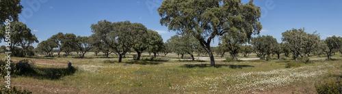 Fotografia, Obraz  Spring landscape in Alentejo