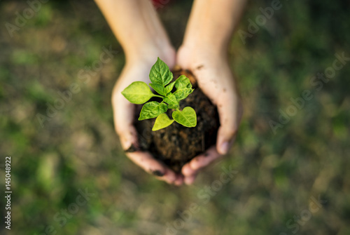 Valokuva  Hand holding sprout for growing nature