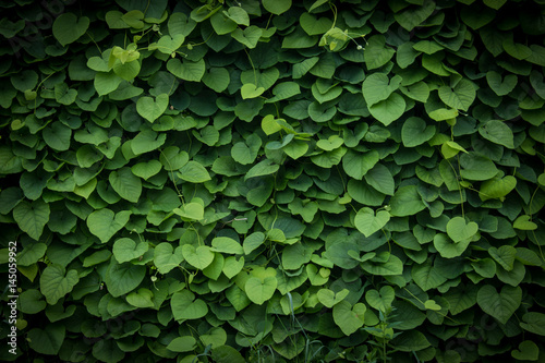 green wall, plant background