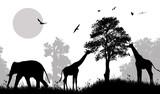 Fototapeta Sawanna - Safari wild animals silhouette
