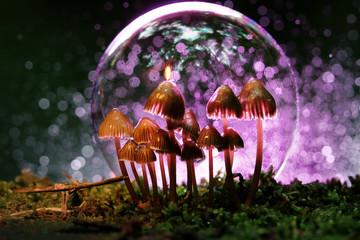 unusual photos of mushrooms...