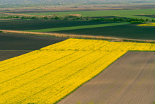 Yellow Oilseed Rape Field Under The Blue Bright  Sky