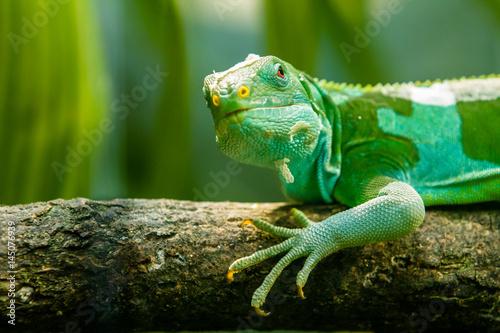 Foto op Plexiglas Kameleon Grüne Echse