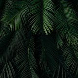 Creative nature layout made of tropical leaves and flowers. Flat lay. Summer concept. - 145093153