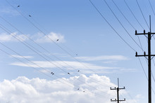 Electricity Post, Chaotic Wire With Birds On Wire And Blue Sky Background