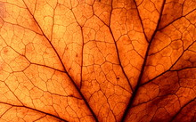 Abstract Leaf Veins