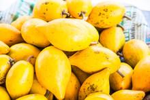Fresh Canistel Fruits