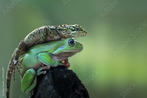 Foto op Canvas Kikker Frog and Lizard