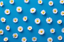 Daisy Pattern. Flat Lay Spring And Summer Flowers On A Blue Background. Repeat Concept. Top View