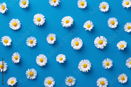 Spoed Foto op Canvas Madeliefjes Daisy pattern. Flat lay spring and summer flowers on a blue background. Repeat concept. Top view