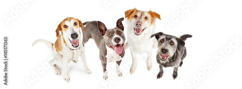 Foto  Four Happy Dogs Looking Up Horizontal Banner